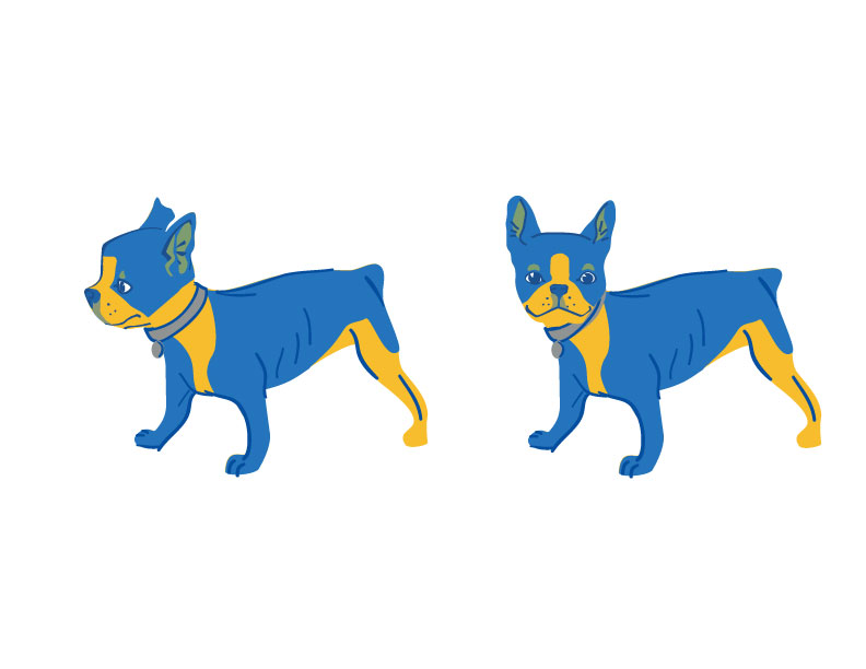 Study for Financial Advisor Brand Identity, Terrier